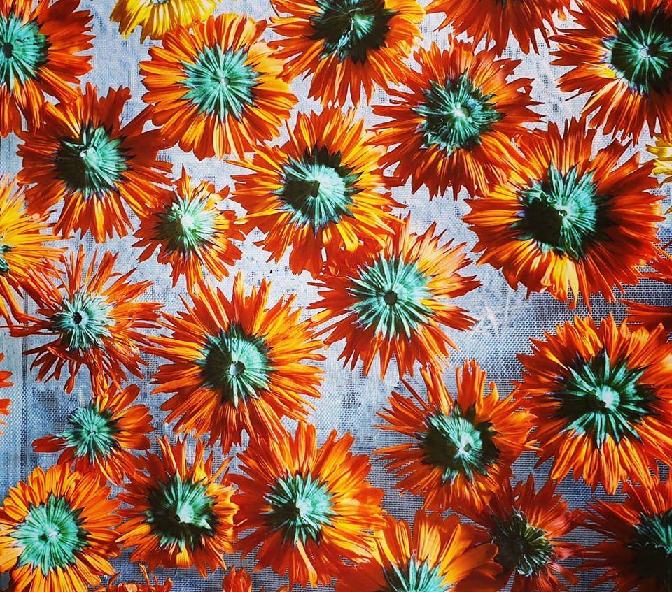 séchage des fleurs de calendula